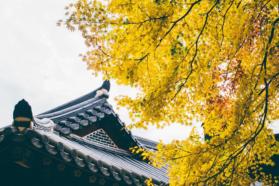 GyeongJu Autumn Fall Leaf Yellow Roof Korea Travel Trip Kuala Lumpur Melaka Johor Photography Top Best  Photographer 韓國 旅行 釜山 慶州 Jens Kv