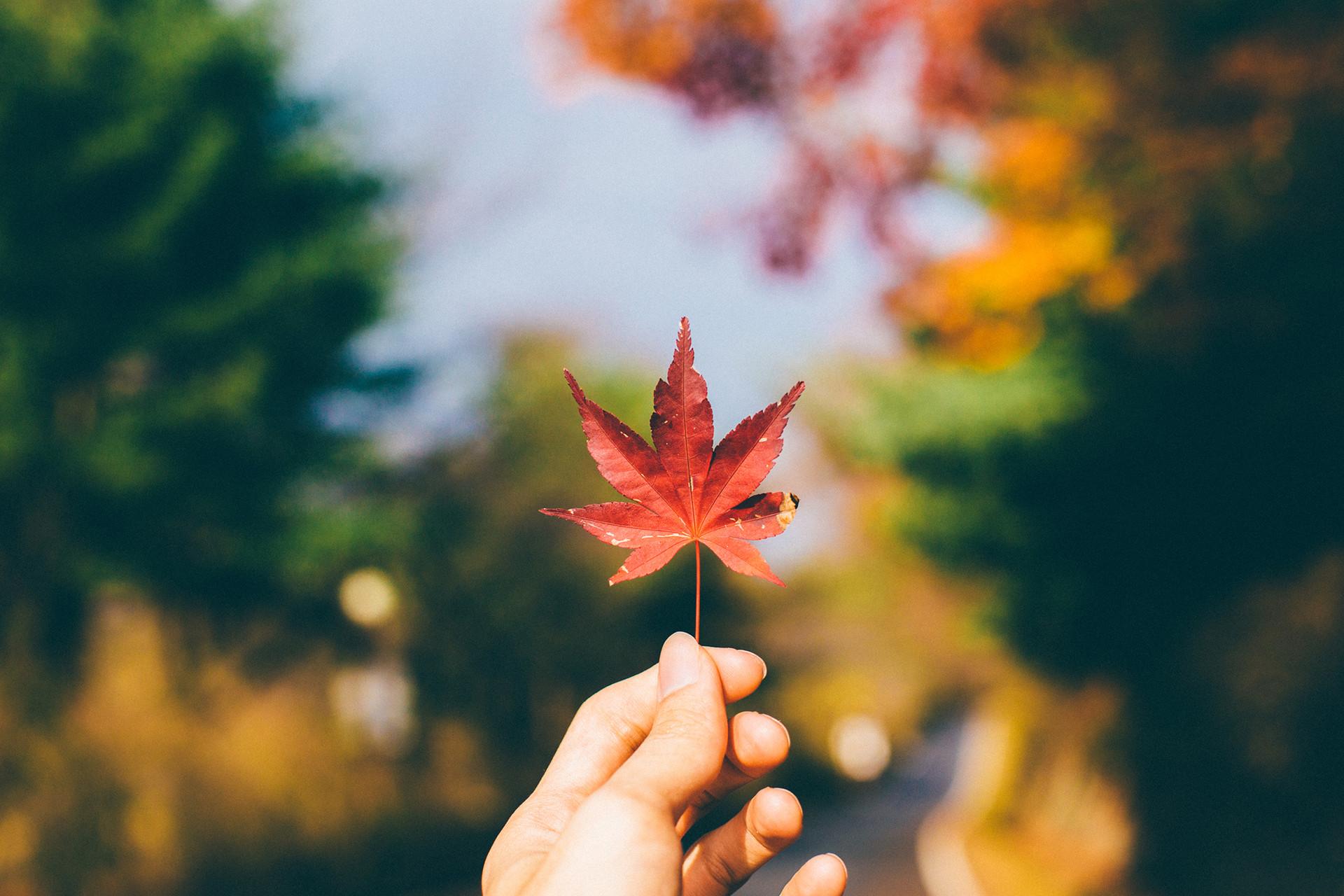 Gyeongju Autumn Leaf Fall Red Korea Travel Trip Malaysia Kuala Lumpur Melaka Johor Photography Top Best  Photographer 韓國 旅行 釜山 慶州 Jens Kv