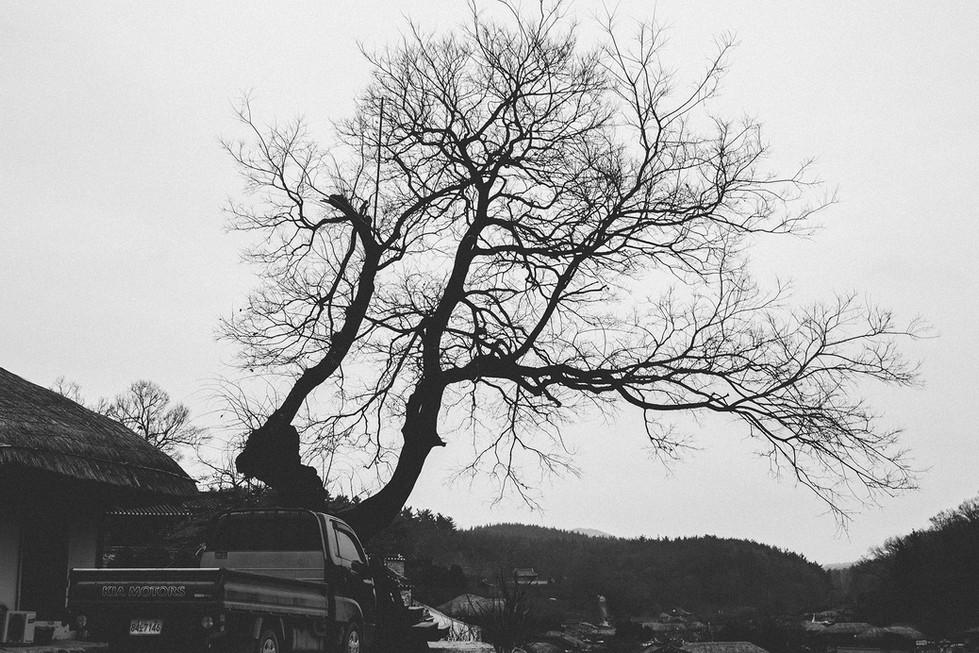 Tree Black and White Busan Ulsan Korea Travel Trip Malaysia Kuala Lumpur Melaka Johor Photography Top Best  Photographer 韓國 旅行 釜山 Jens Kv
