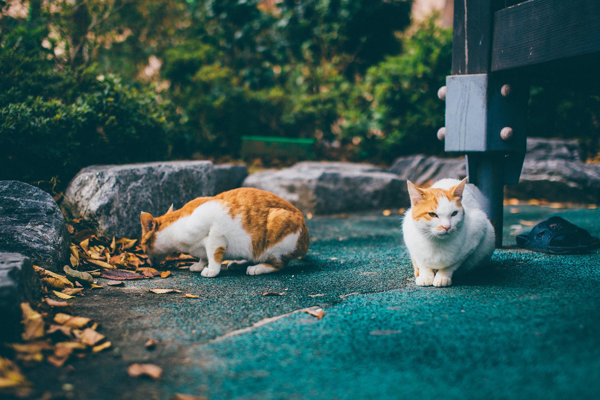 Gamcheon Culture Village Cat Cute Korea Travel Trip Malaysia Kuala Lumpur Melaka Johor Photography Top Best  Photographer 韓國 旅行  釜山 甘村文化村 Jens Kv