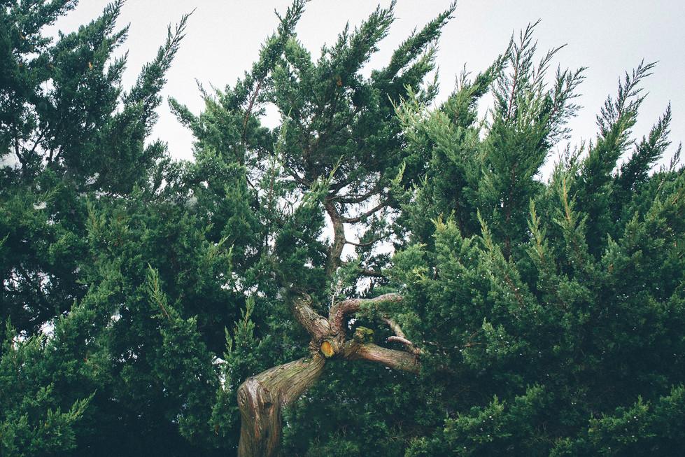 Tree Green Korea Travel Trip Malaysia Kuala Lumpur Melaka Johor Photography Top Best  Photographer 韓國 旅行 海雲台 釜山