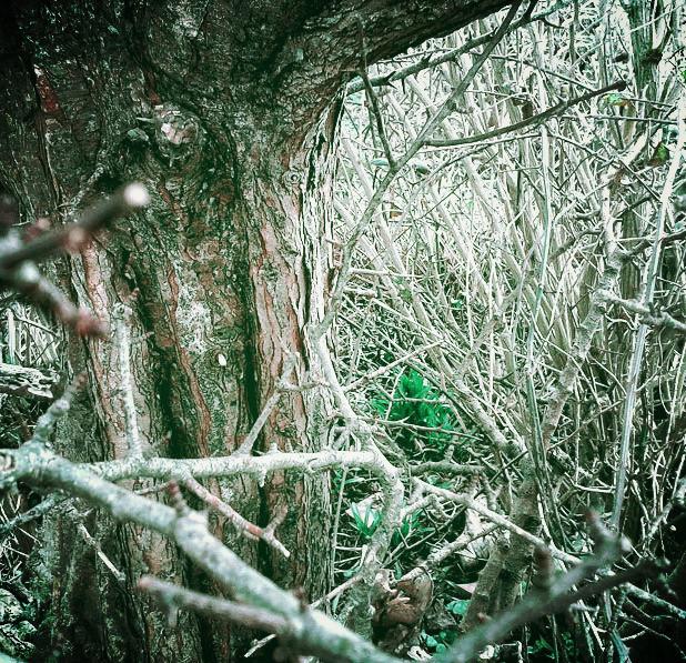 Hawthorn thicket, The Changeling, The Dark Beloved