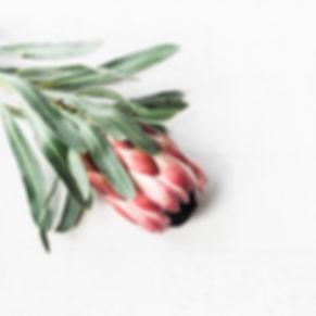 Lush_Botanica_Spa-194.jpg