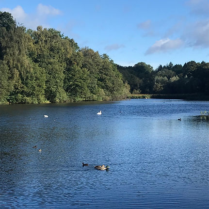 Cannop Forest of Dean