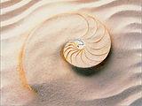 spirale coquillage.jpg