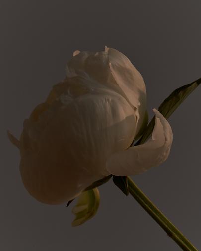 Screenshot 2021-05-26 at 22.36.21.png