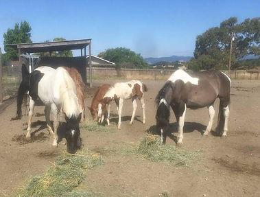 Faith Flores, photo of horses.jpg