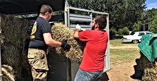 Unloading hay, Kristy Cameron hay bank,