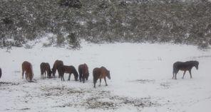 Judy Barnes horses.jpg