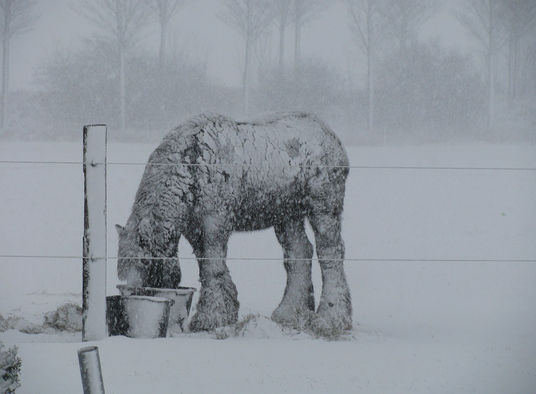 draft horse in snow.jpg