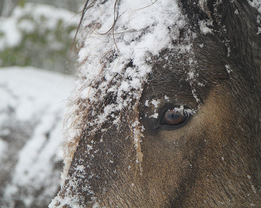 Horse in snow, pixabay.jpg
