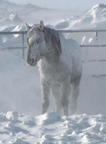 A black stallion stands in subzero temperatures without shelter at the ISPMB facility in Lantry, SD