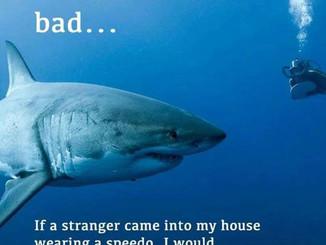 Sharks aren't so bad