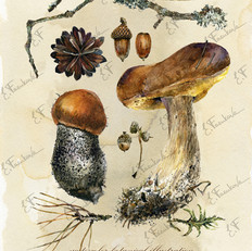 botanic#2130-1.jpg
