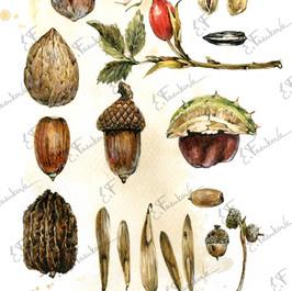 botanic#2130-12.jpg