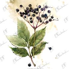 botanic#2130-10.jpg