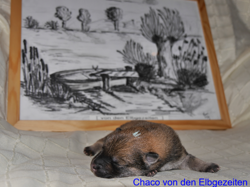 Chaco von den Elbgezeiten