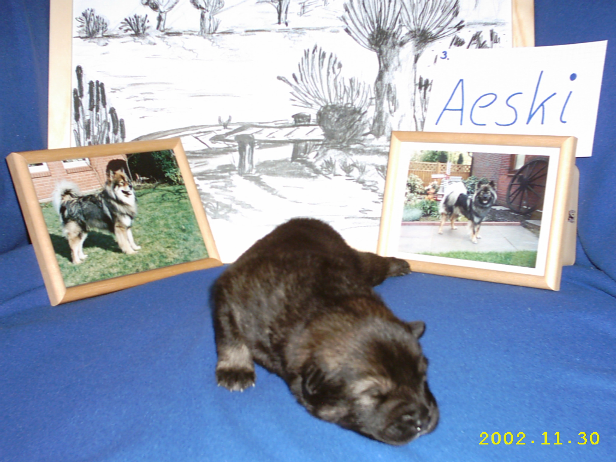 Aeski