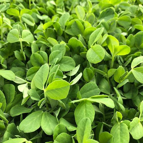Pea Shoots - Certified Organic