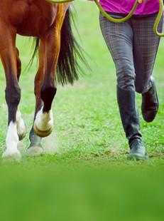 Horse coaching (1)_edited.jpg