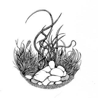 terrarium1.jpg