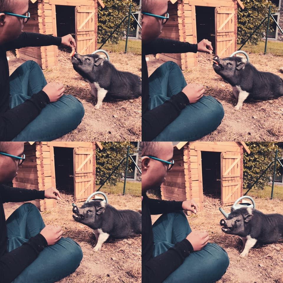 Notre ami Francky le cochon