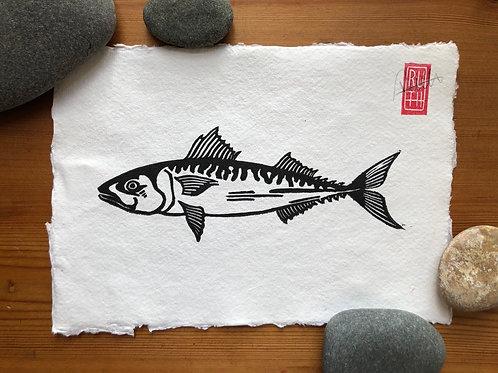 A5 print - Mackerel