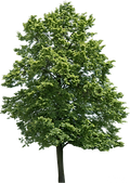 1441283259_trees-2-01.png