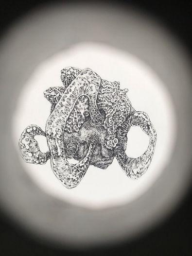 Polymorphs1.jpg