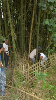 procuring bamboo locally