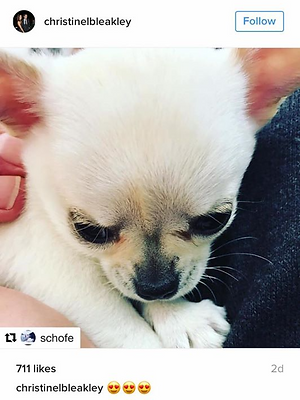 This Morning ITV Puppy Secrets Phillip Schofield Christine Bleakley Lampard Chihuahua