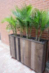 plantersuse_edited.jpg