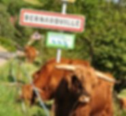 Panneau Geiger Koening-2_edited.png