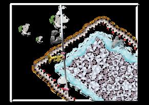 pool of piradise