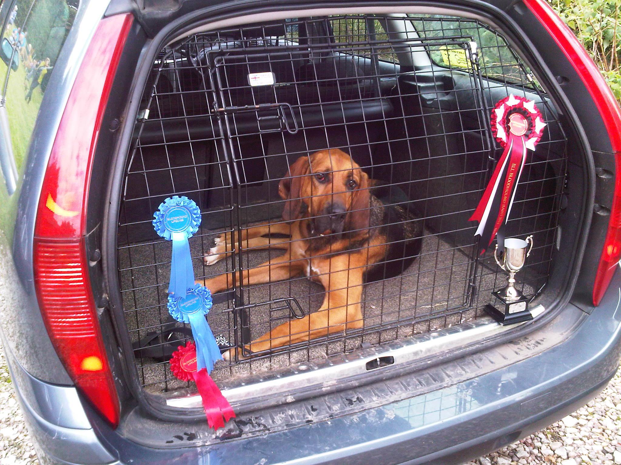 Bruno in car