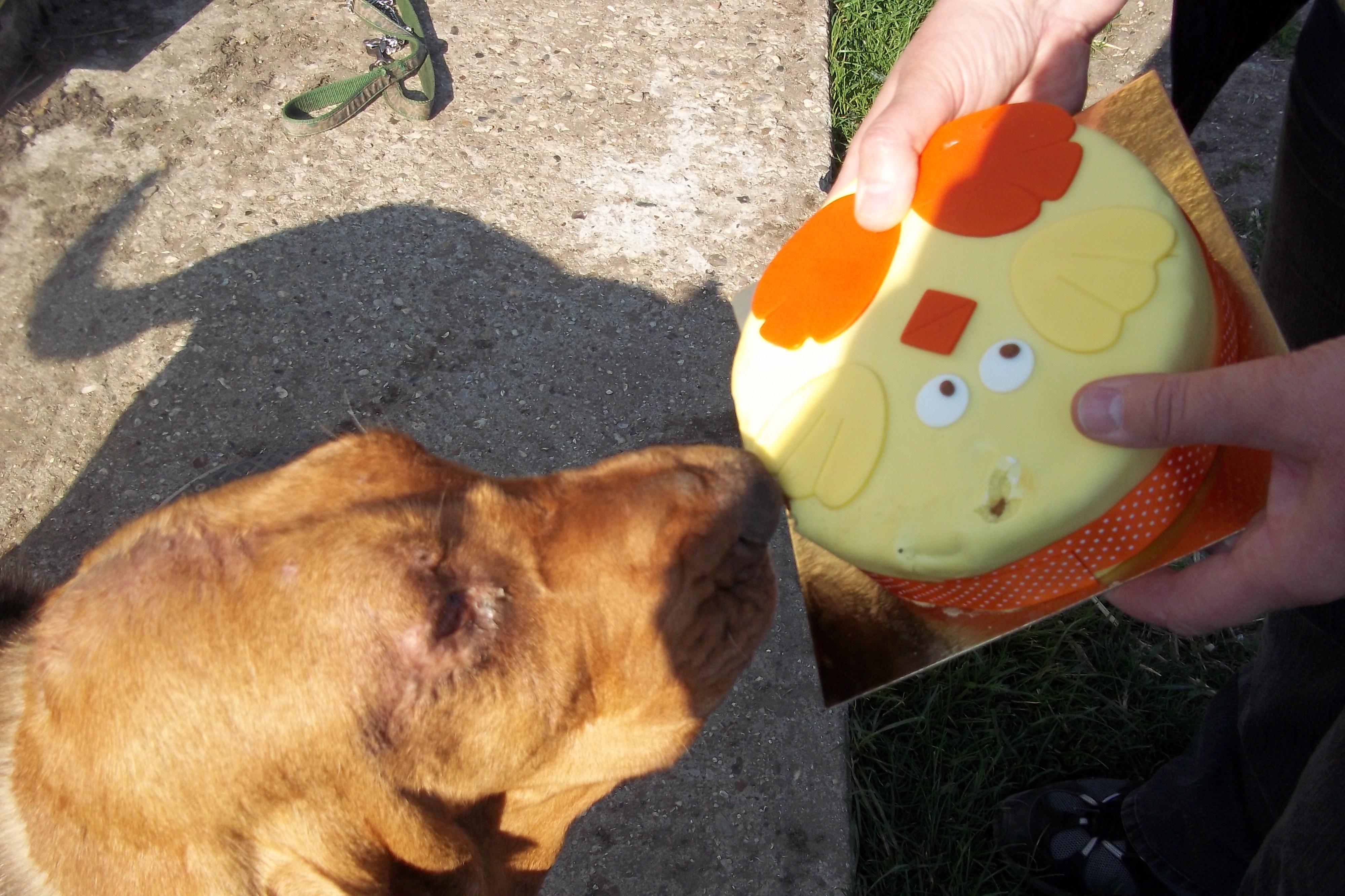Bertha & cake