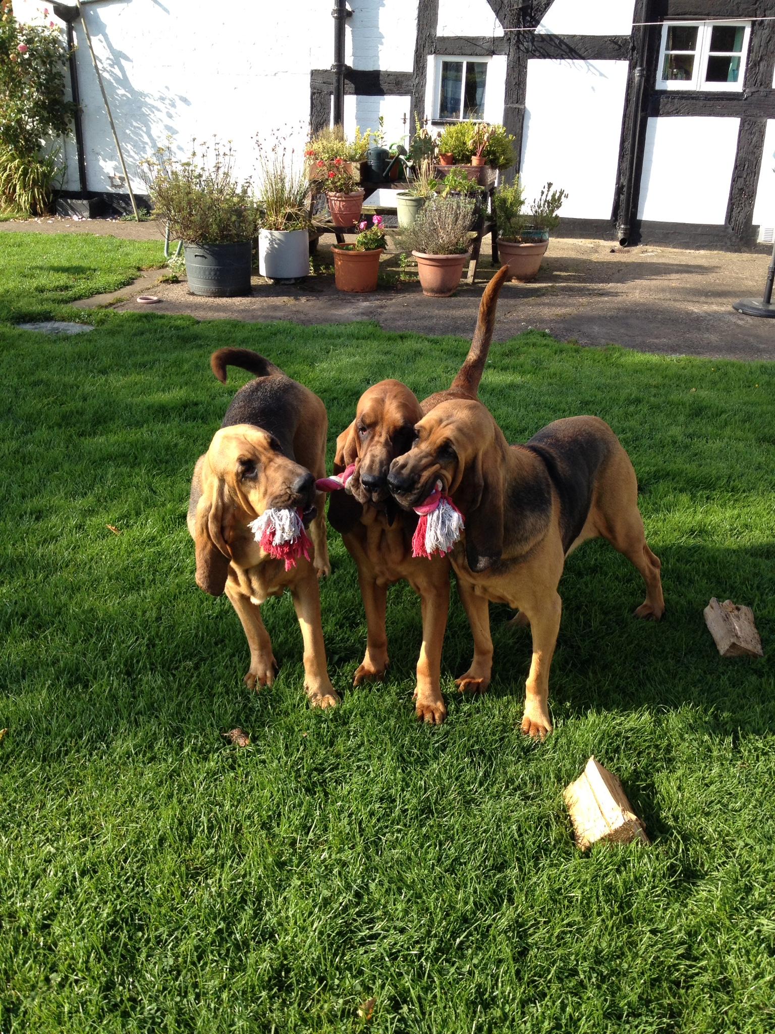 leyna, evie and purdie