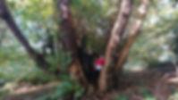 Omega team tree.jpg