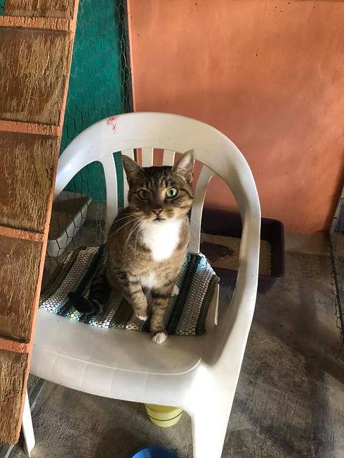 Jaimon-FB-Skanky Puss.jpg