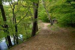 Colditzer Forst