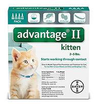 adv-ii-cats-Kitten-4-pre.jpg