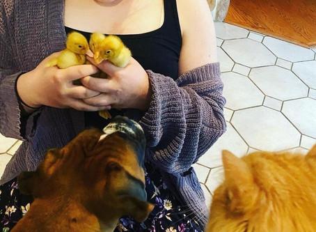3 Baby Ducks Teach Us About Getting Through A Crisis