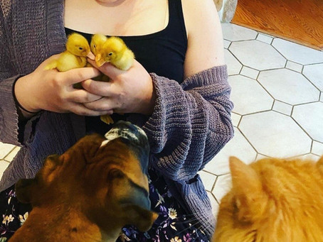 3 Baby Ducks Teach Us About Getting Through A Crisis