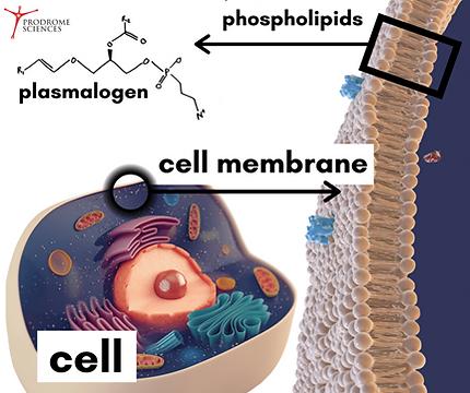 plasmalogens image 1.tif