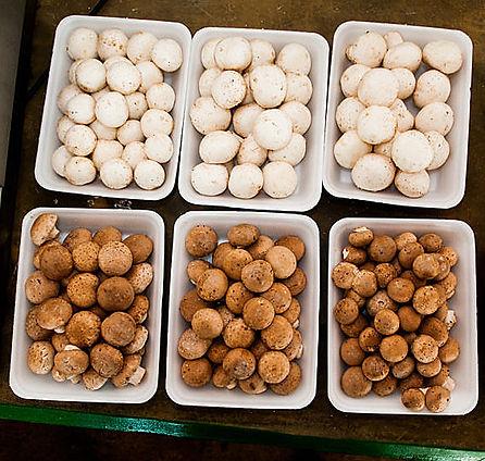 cogumelos champingnon e portobello