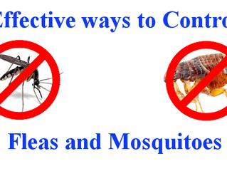 Mosquito and Flea Control