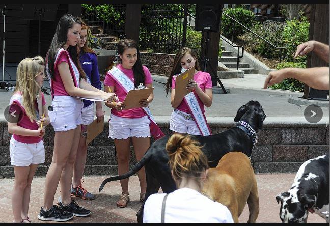 Dog Contest_2015_GDP