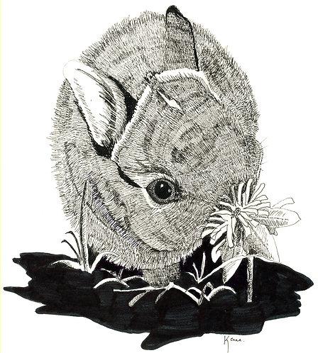 My Rabbit by Kenna Dozier