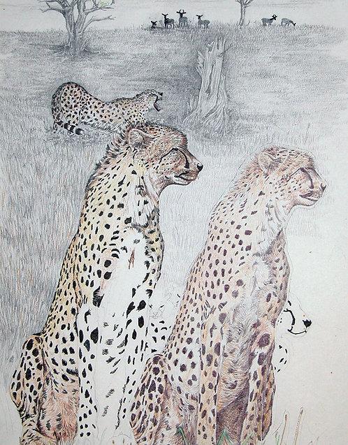 Cheetahs Den by Kenna Dozier