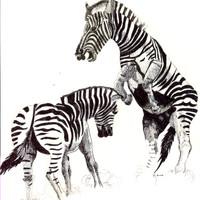 Blk& Wht Drawing Zeabra.jpg